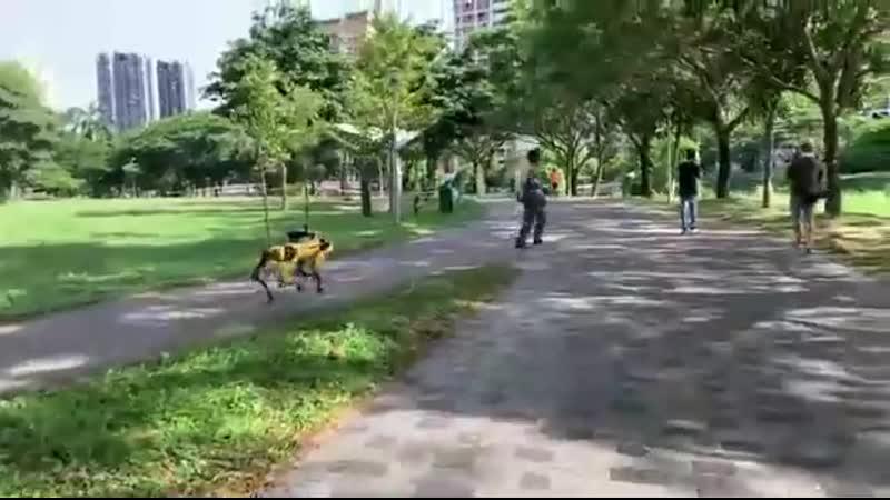Робопес от Boston Dynamics в Сингапуре выпущен на волю