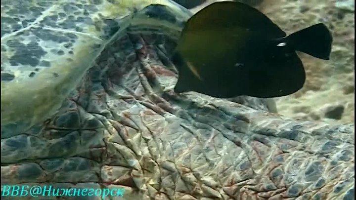 BBC Черепахи гиды в Тихом океане Документальный 2007