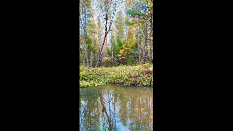 Ural forest stream