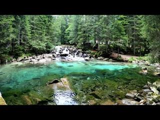 Звуки природы, пение птиц, Звуки Леса, для релаксации, сна, Медитации, Relax