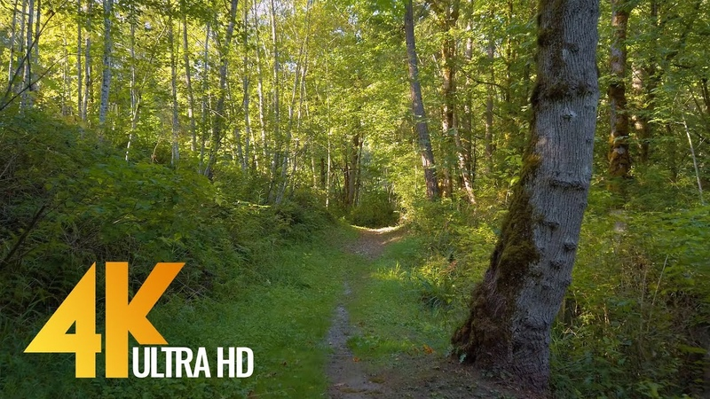 4K Virtual Forest Walk with Birds Singing in the Woods Newcastle Highlands Trail 2 HOUR