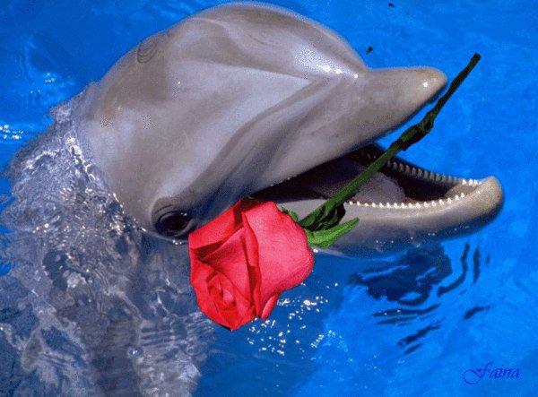 Картинки с днем дельфинов