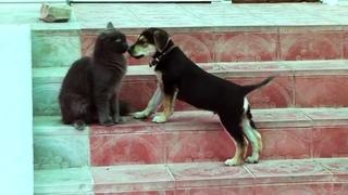 Кот Нибелунг впервые в жизни увидел щенка: его реакция