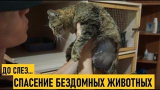 2. Спасение животных. Павлодарский приют