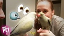 Parakeet Digs His Own Reflection 🐦😏 Funny Animal Compilation