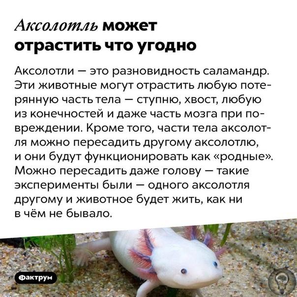 Интересные факты о животных и природе. 1 часть