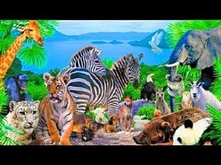 Необыкновенные животные Детская энциклопедия