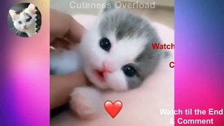 Super cute kittens || Worlds most Cute and Funny Kittens || Part 3