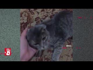 В Миассе спасли кошку, у которой, казалось бы, не было шансов выжить