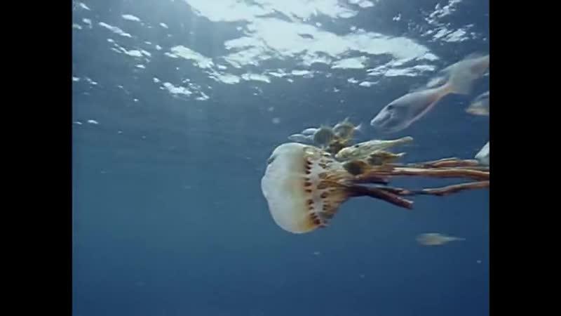 20 1989 Таиланд Узники моря Подводная одиссея команды Кусто