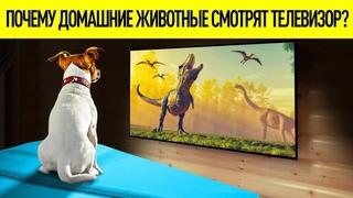Действительно ли собаки и кошки смотрят телевизор?!