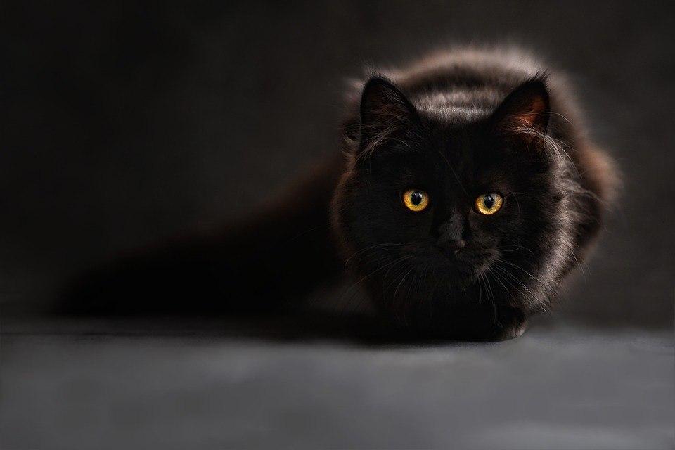Изолятор для кошек появился в приюте для животных в Некрасовке