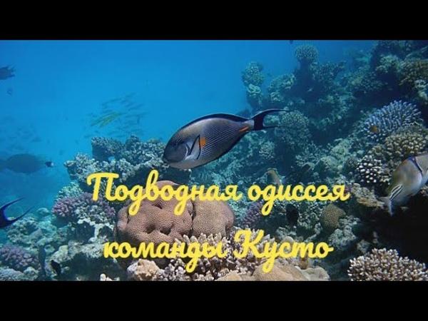 Подводная одиссея команды Кусто Тайна подводных рифов