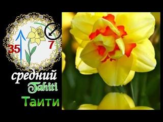 Самые красивые сорта НАРЦИССОВ.Топ most beautiful varieties of NARCISSOV