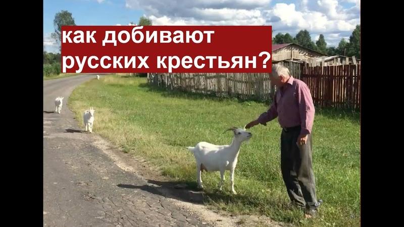 Как добивают русских крестьян Владимирский фермер об аграрной политике государства.