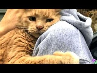 Кот, рыдавший почти по-человечески, прижимался к хозяйке. Он решил, что больше никогда не оставит их