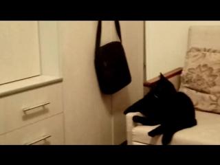 Кузя смотрит мультик про котят
