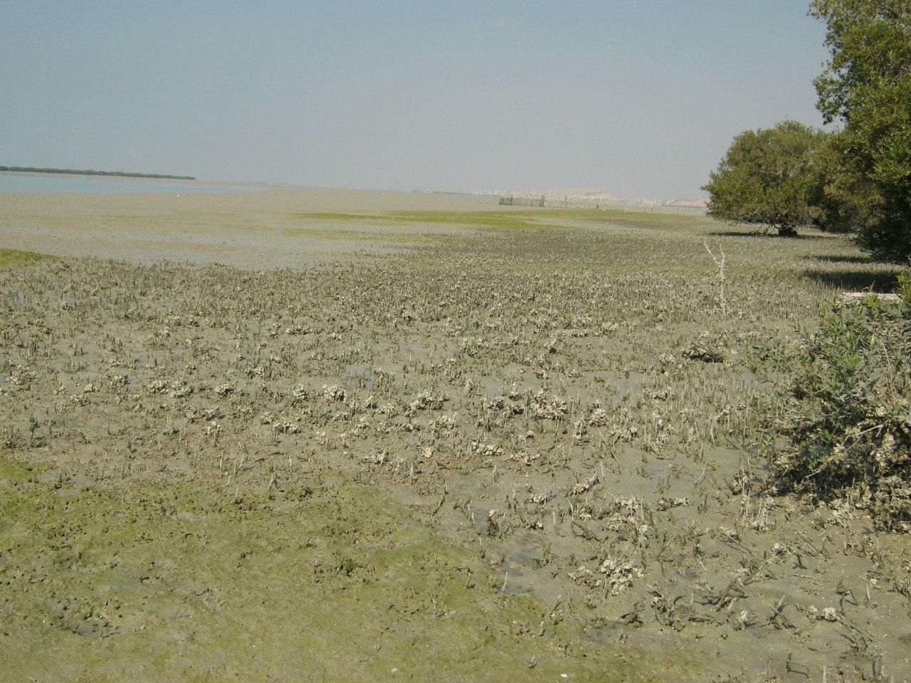 Мангровые заросли близ села Лафт