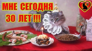 Кошачий Возраст по Человеческим Меркам! Узнайте Сколько Вашей Кошке Лет?