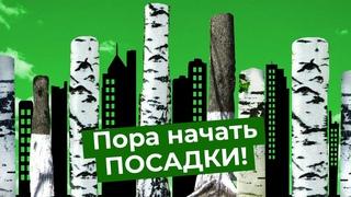 Природа в городе. Как сделать город лучше с помощью деревьев, газонов и растений?