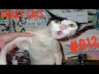 🐈Кошачьи приключения! 🐈 Подборка приколов с котами для хорошего настроения! 😸#приколы #cats #кошки