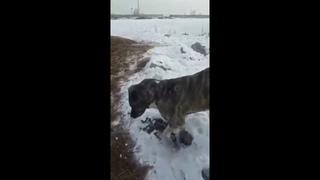 Казахстан. Замерзли животные и люди. Прислали по Ватсапу. Это реально? В Якутии тоже лютые морозы