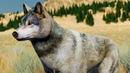 Сим Волков 1 Кид в новом симуляторе Wolf Quest. Питомец Альфа на пурумчата