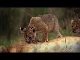African Cats - Disney Nature Series - 2011