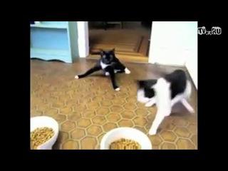 накурил кота урюрюрюрю)Dub-Step