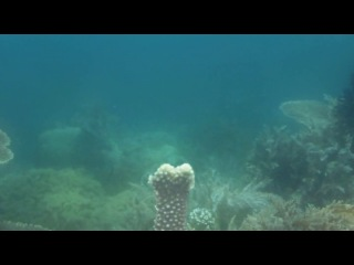 Discovery Экватор 04 Индонезия риф изобилия