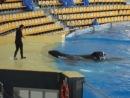 Orcinus orca. Loro Parcque
