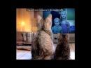 «ФотоФания» под музыку Бурито feat. Ёлка - Ты знаешь обо мне все, что можно знать..