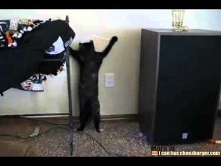 Кот-танцор и лазерная указка