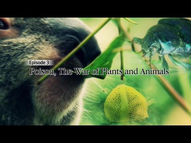Яд. Достижение эволюции 03. Ядовитая война растений и животных 2015 Видео Dailymotion