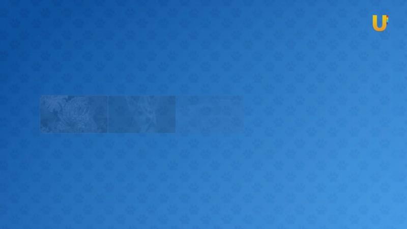 Глазами животных, выпуск 259 (Дратхаары - немецкие собаки для русской охоты)
