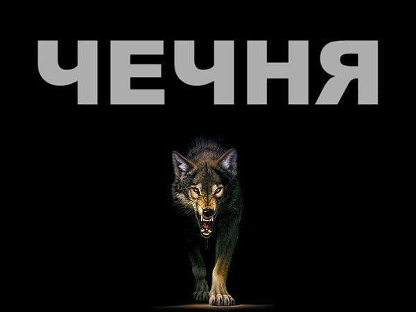 Чечня волк картинка