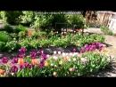 Мои цветочки под музыку Стас Михйлов Посвящается МАМАМ Picrolla