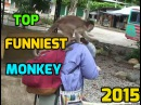 Top Funniest Monkeys Compilation 2015, Best Fails Funny animals