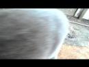 Кот раколов