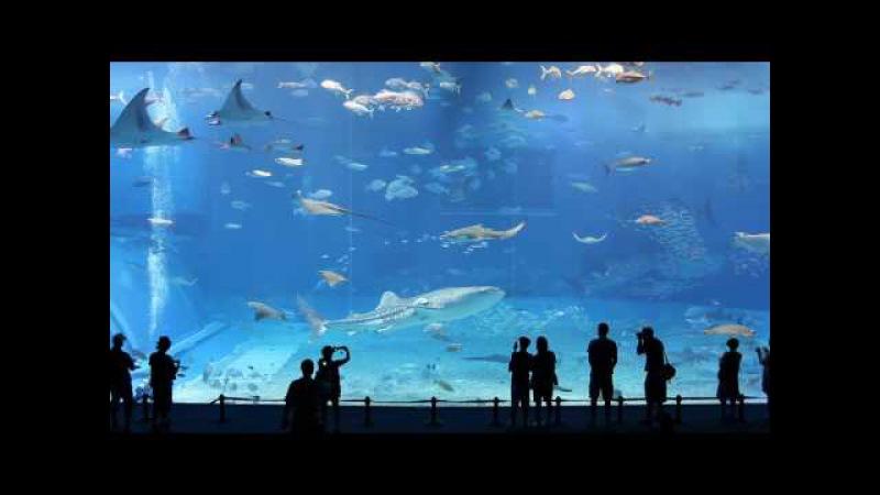 Kuroshio Sea - 2nd largest aquarium in the world - Okinawa Churaumi Aquarium.