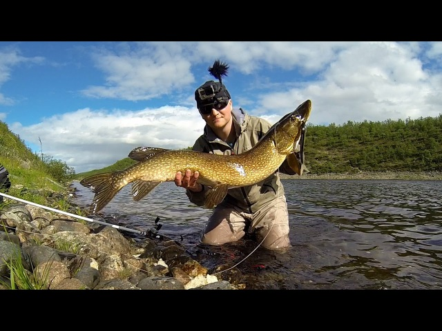 111cm Hauki Norjasta Big pike from Norway