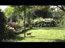 Цветочная сказка в нашем саду. Потрясающая музыка.