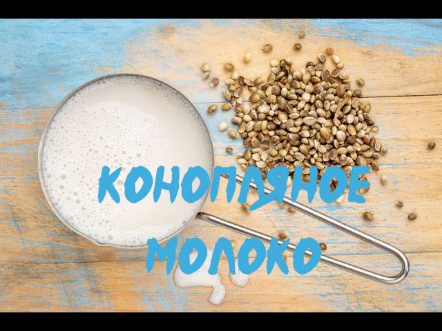 Конопляное Молоко Сыроедное (рецепт)   Tonya Ogino