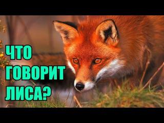 "Ylvis - The Fox (""Что говорит лиса"" russian cover by Boloria)"