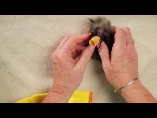 Bat Orphans. Australian bat clinic