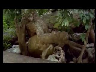 Ina_-_7_malayalam_full_movie_-__i.v.sasi_-__teen_love_and_sex___1982_