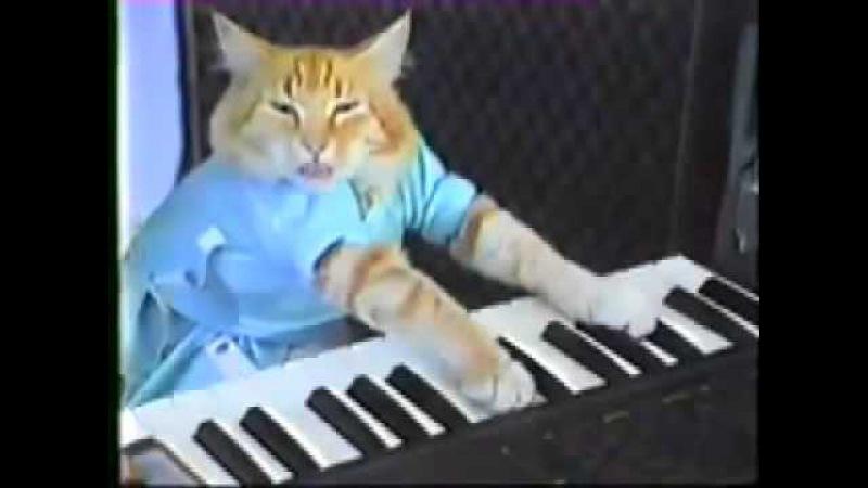 кот играет на синтезаторе.