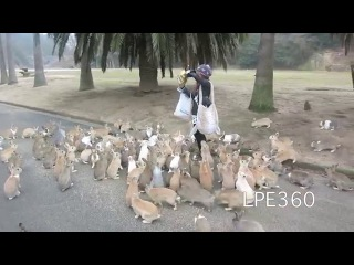 Сотня кроликов гонятся за девушкой