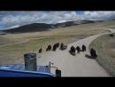 Avtostop po mongolski 2