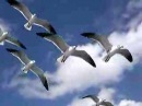 Birds in flight up close and personal